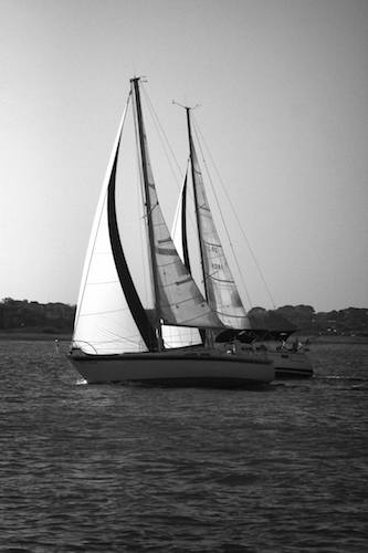 Sailboats Neck and Neck